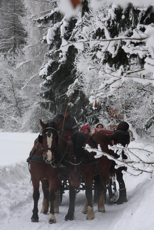 Kutschfahrt im Winter (Nachbarort Neuhaus)